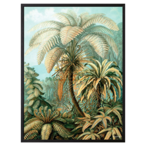 Poster PALM